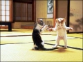 Karate Kitten