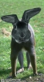 Rabbit Monkey