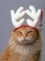 Kitty Christmas Cheer