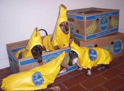 Banana Dogs
