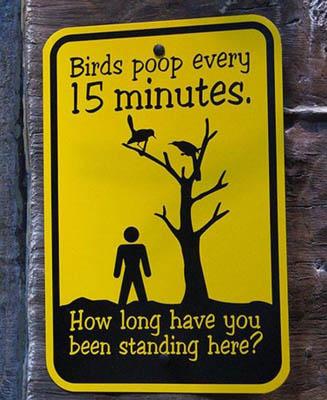 Birds Poop