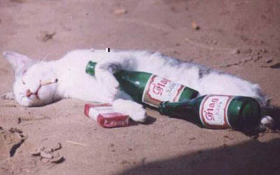 Drunk Mexican Cat