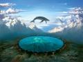 Whale flying.jpg