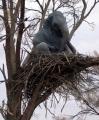 Elephant Nest