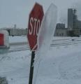 Frozen Stop Sign