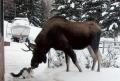 Moose <3 Cat