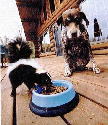 Skunk Food
