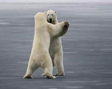 Polar Bear Waltz