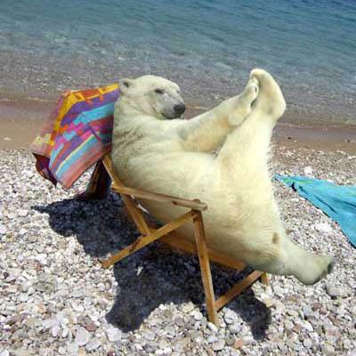 sun bathing polar bear joke of the day