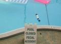 Poop Pool