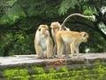 Monkey Inspection