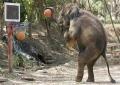 Elephant Hoops